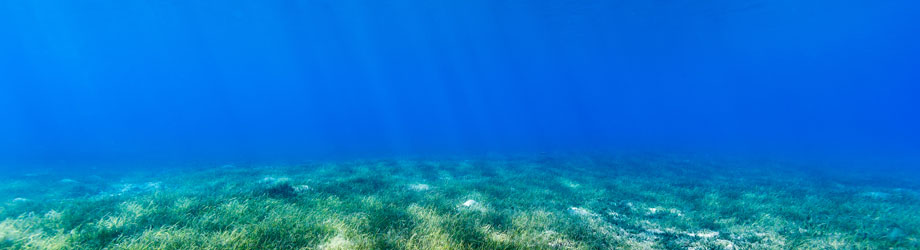 Blue carbon in seagrass