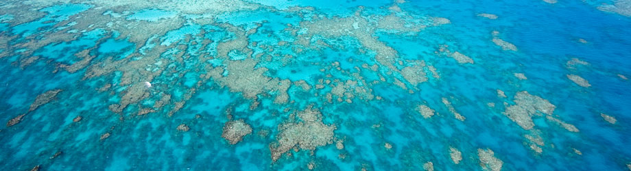 Aerial videw of reef